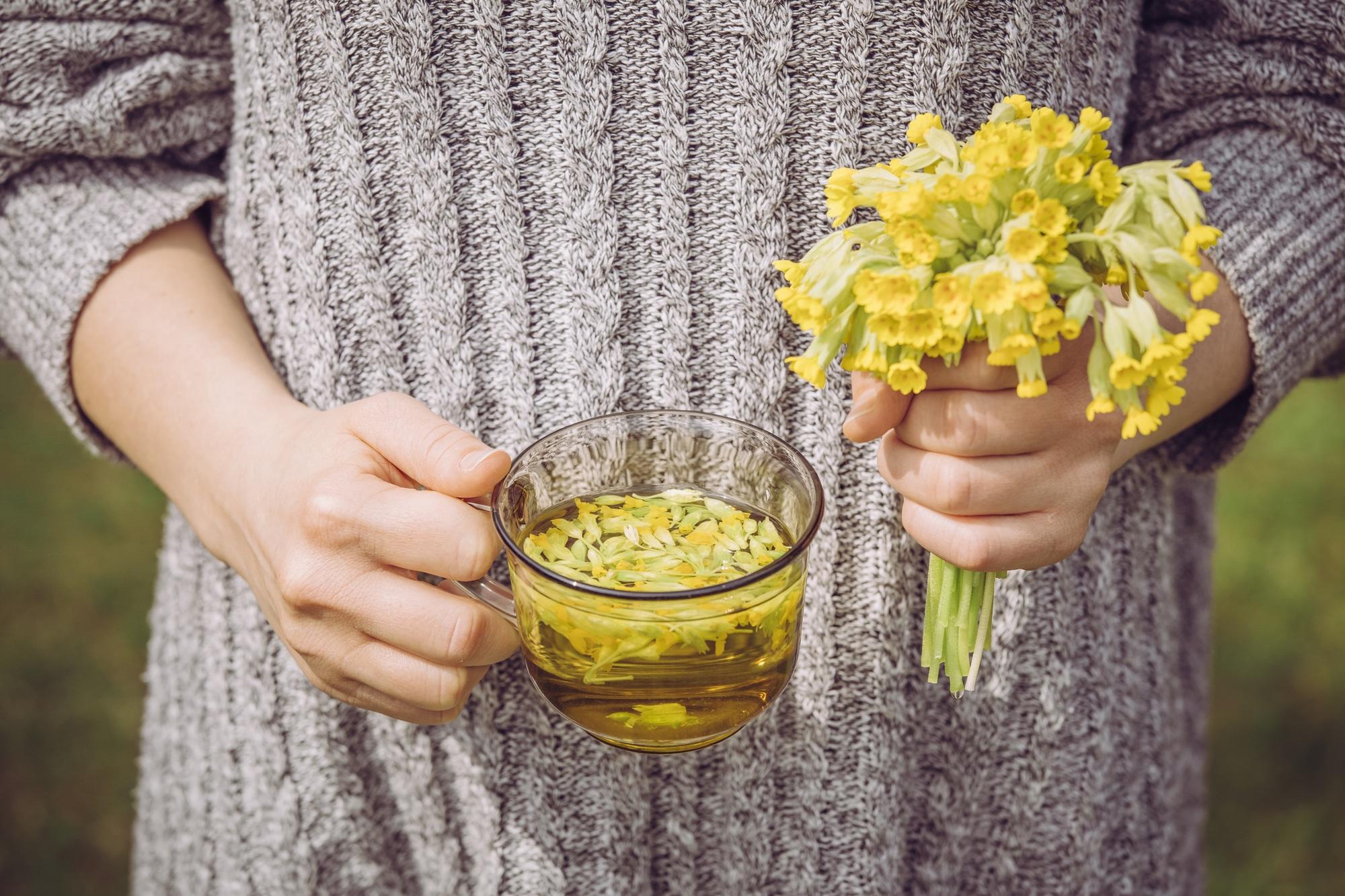 Cup of Primula veris tea
